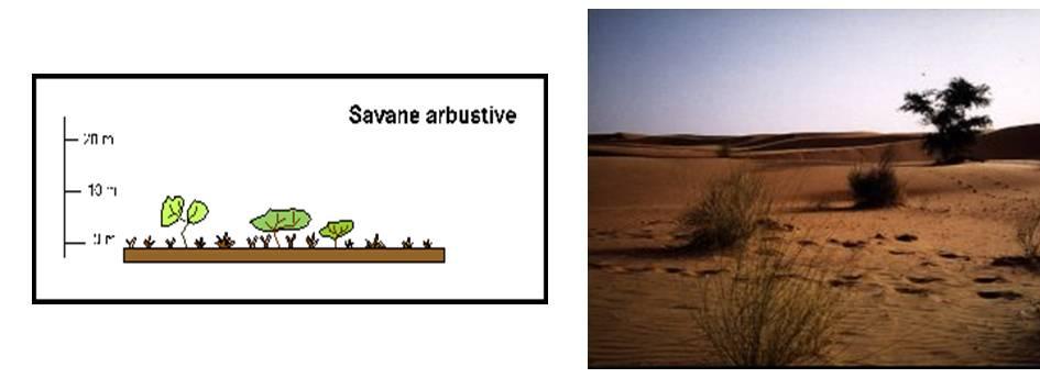 savanearbustive.jpg